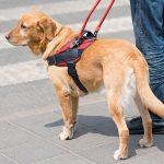 Publicada la Ley 5/2018, de 21 de diciembre, de acceso al entorno de las personas con discapacidad acompañadas de perros  de asistencia.